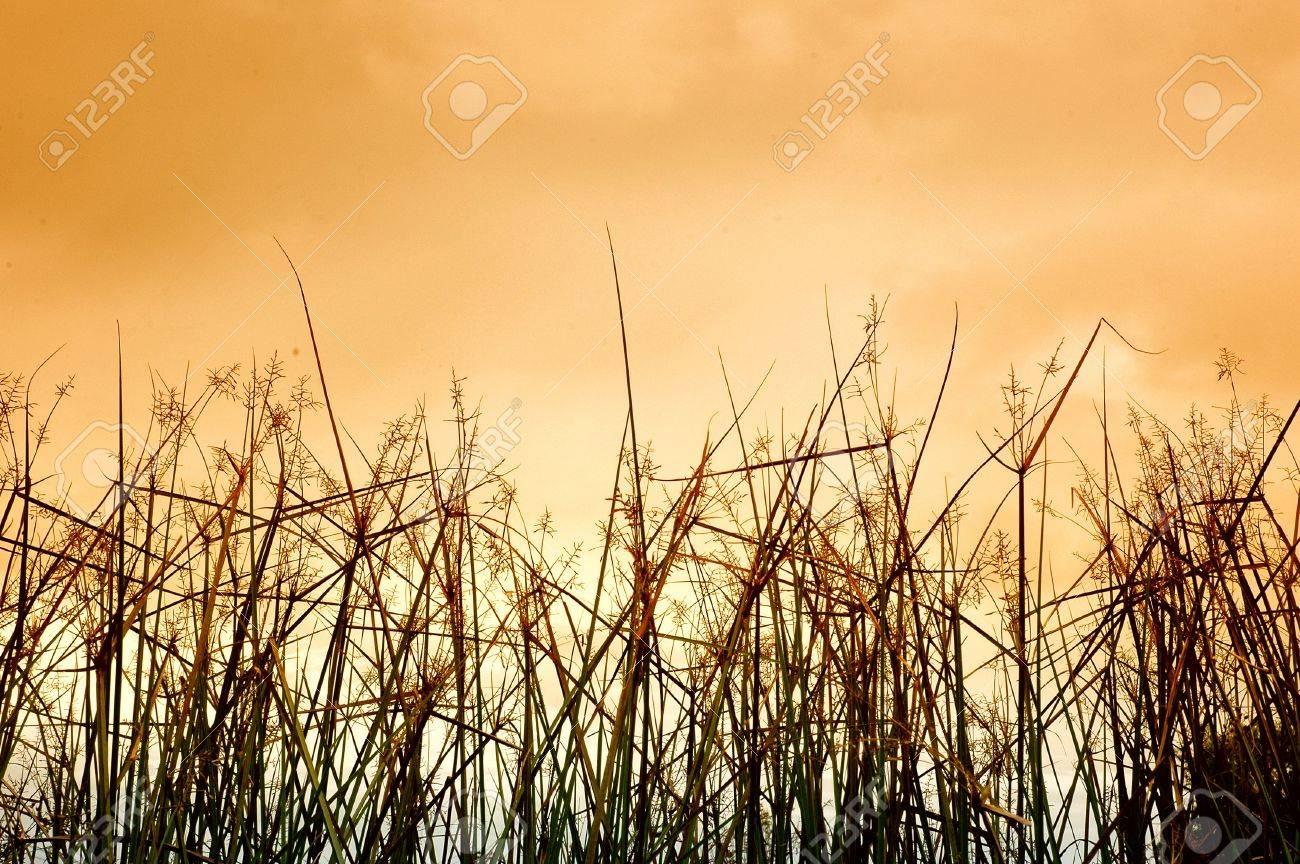 desert grass, photographed by adding a gradient filter effect