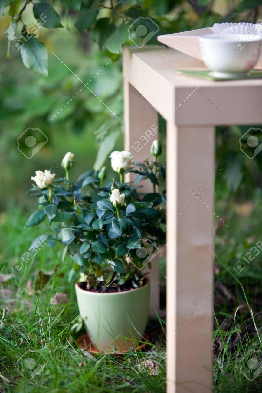 White Rose En Pot En Céramique Et En Bois Dans La Table De Jardin ...