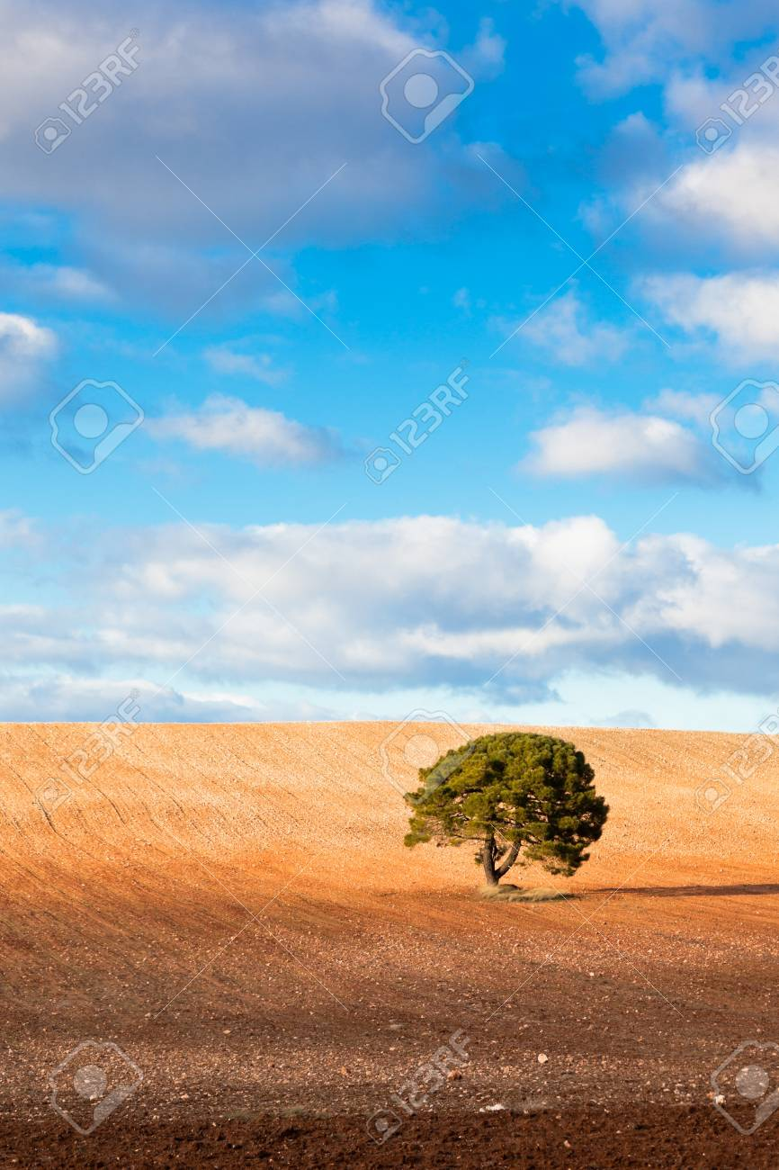 Lonely tree against blue sky with clouds and cultivated field. Stock Photo - 14574392