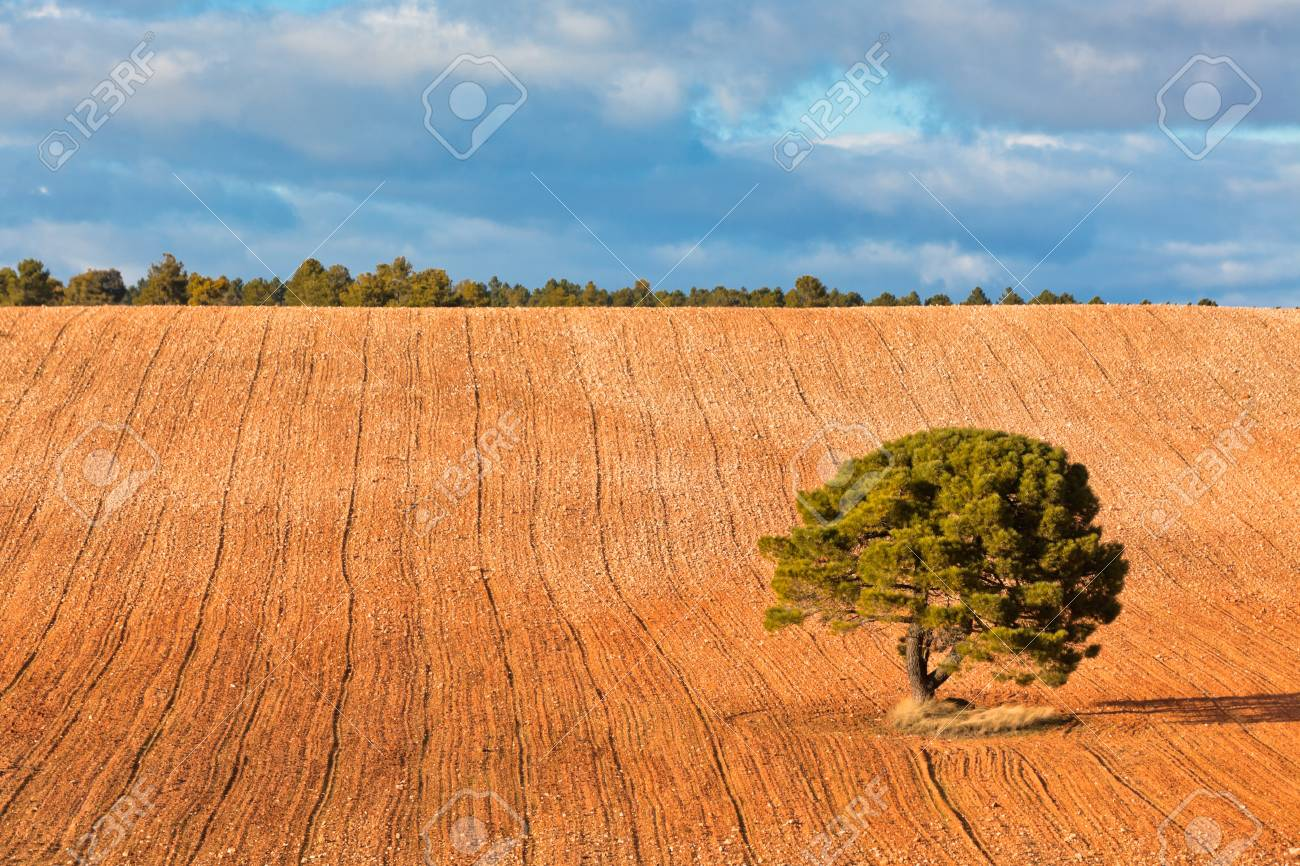Lonely�tree against blue sky with clouds and�cultivated�field. Stock Photo - 14610144