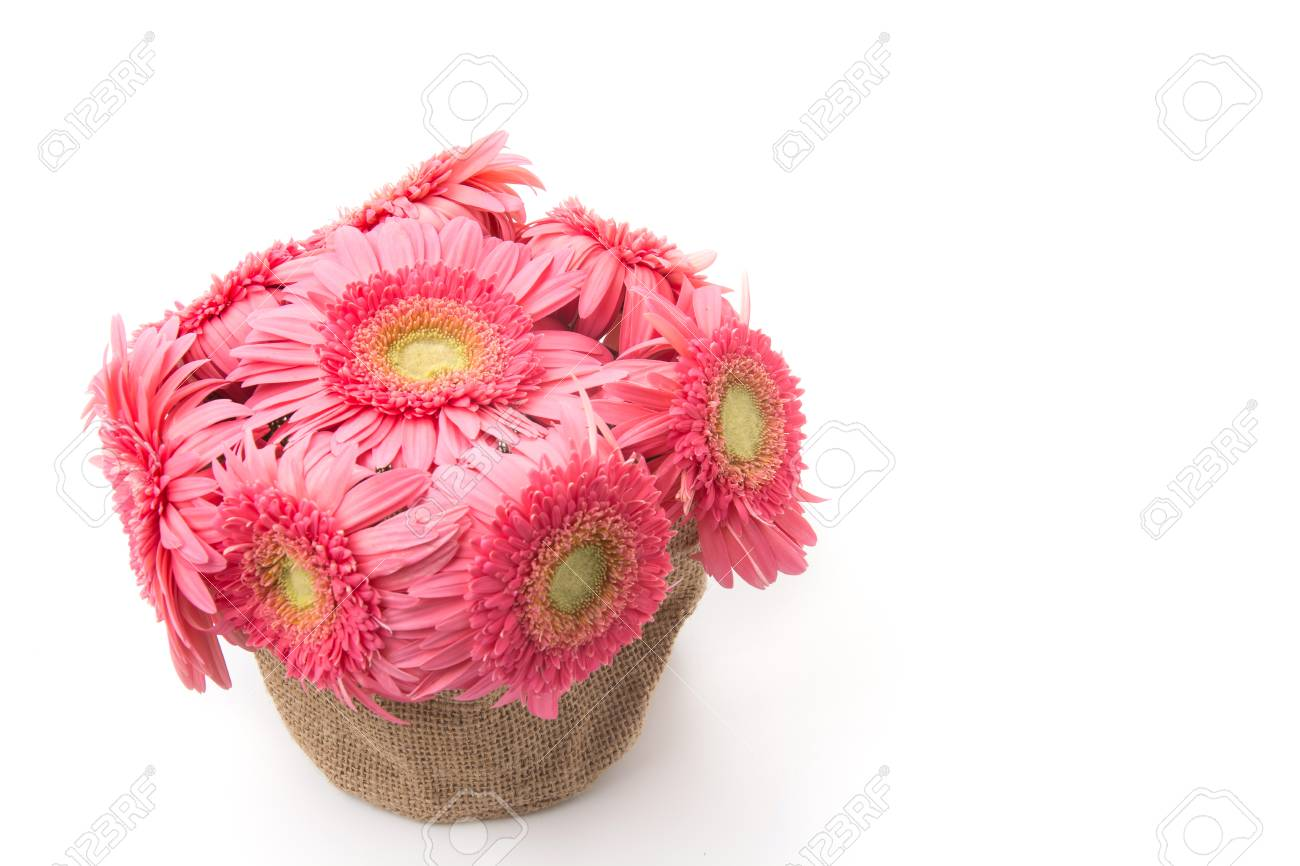 Pink Gerbera Flowers Isolated On White Background Stock Photo