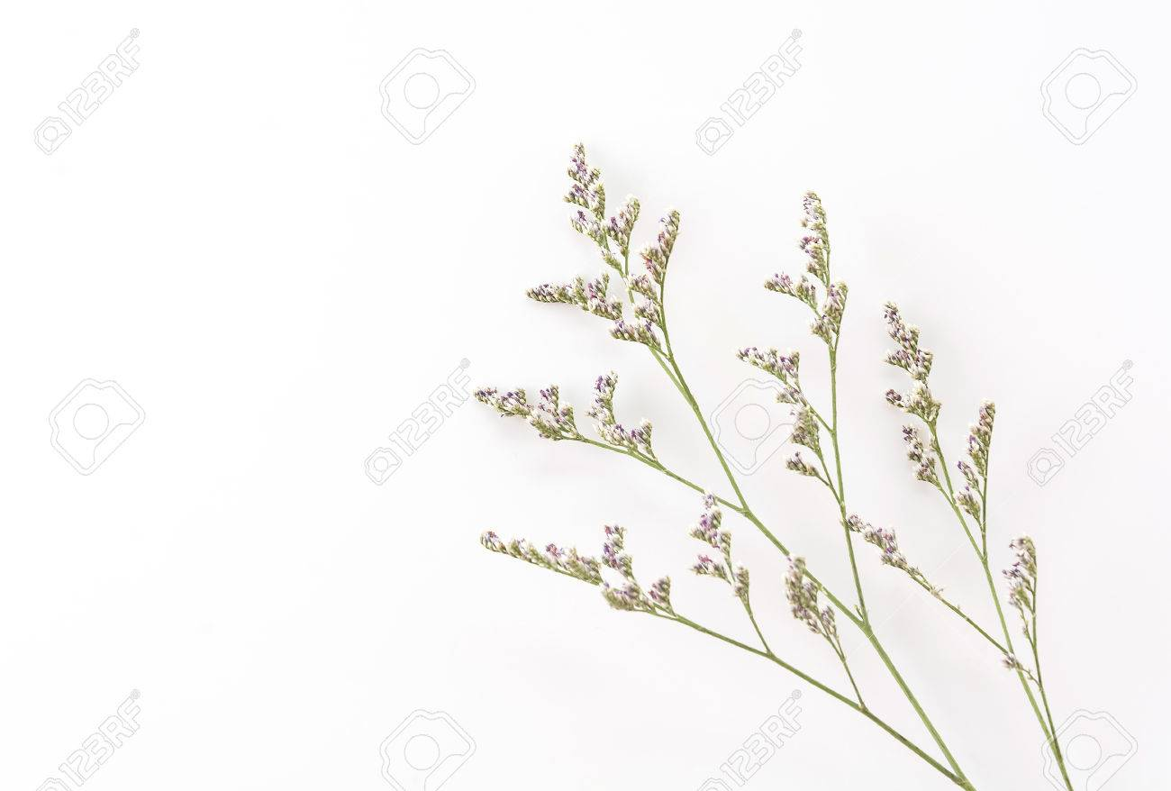 Caspia For Filler Flowers On White Background Stock Photo Picture