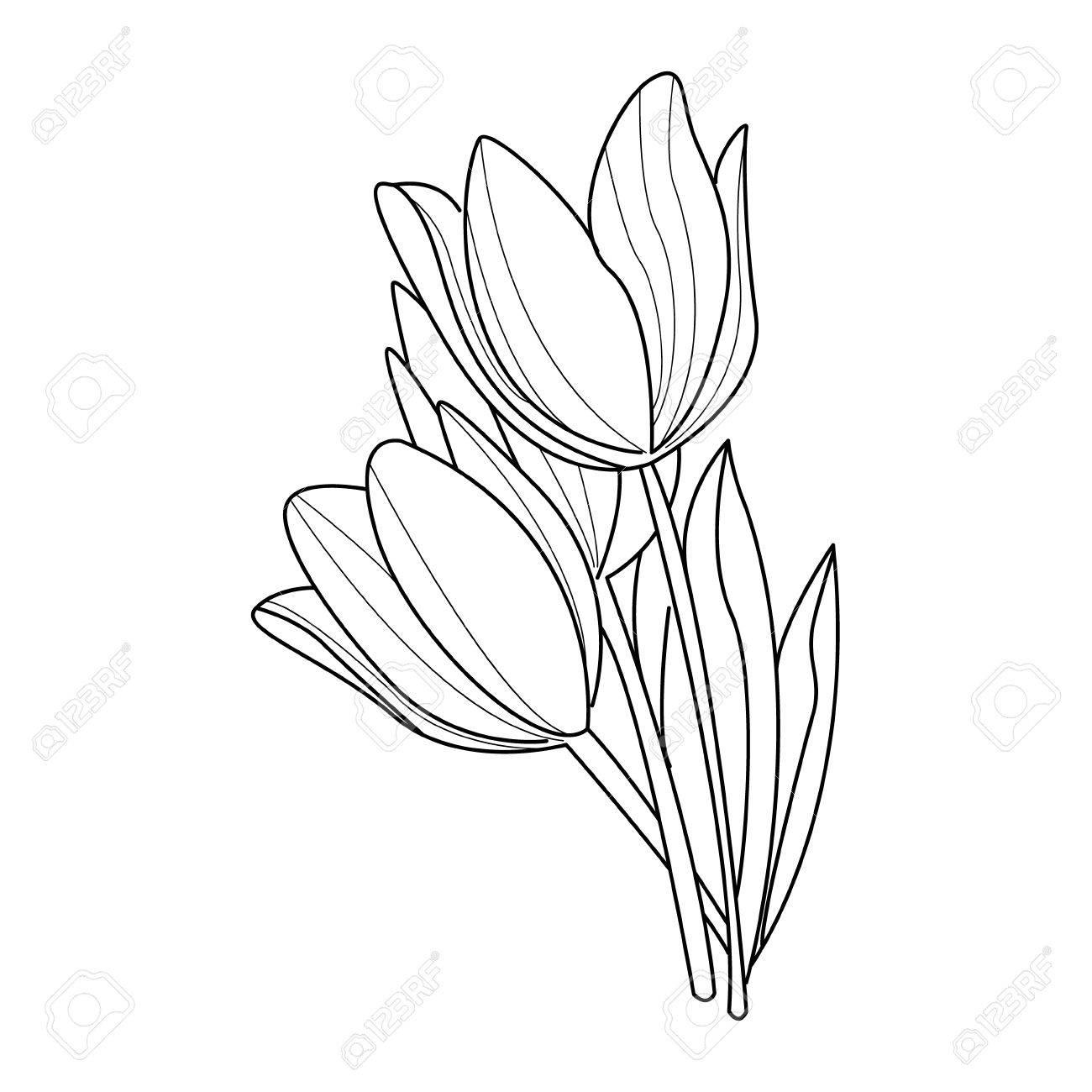 Tulip flowers sketch.