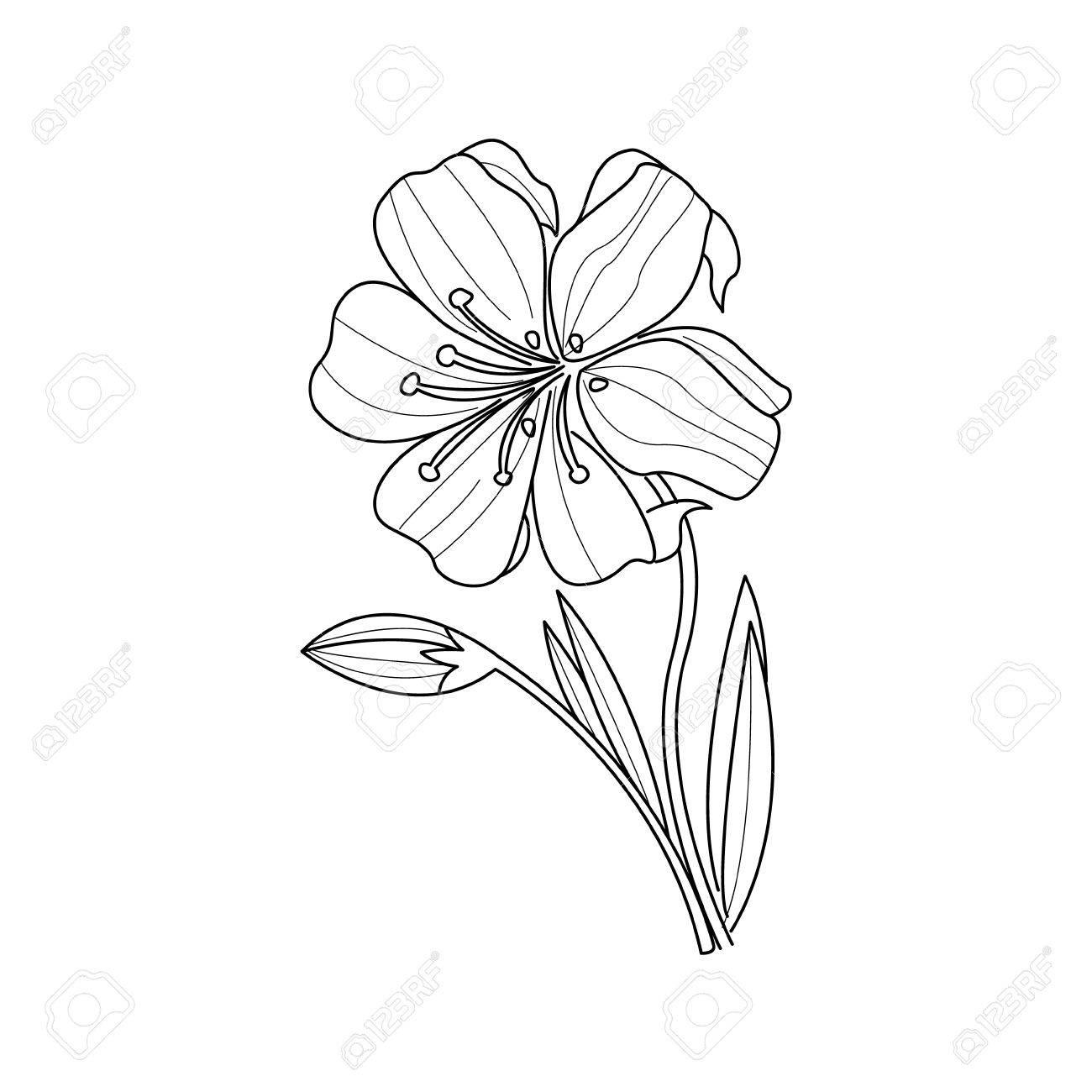 Dibujo Blanco Y Negro De La Flor De Caléndula Para Colorear Libro ...