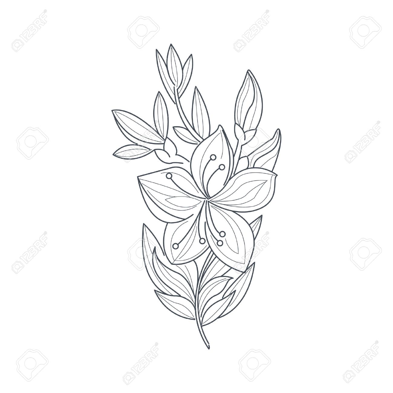 Jasmine Flower Monochrome Drawing For Coloring Book Hand Drawn ...
