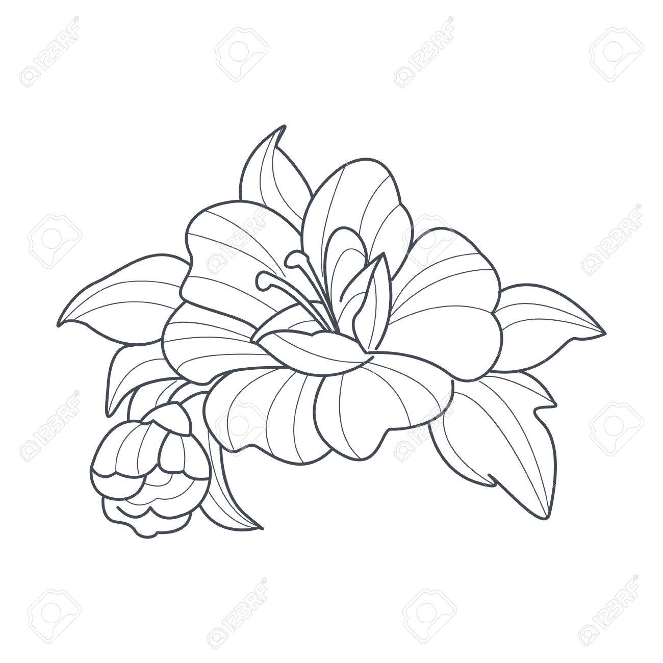 Dog Rose Flower Monochrome Drawing For Coloring Book Hand Drawn Vector Simple Style Illustration Stock