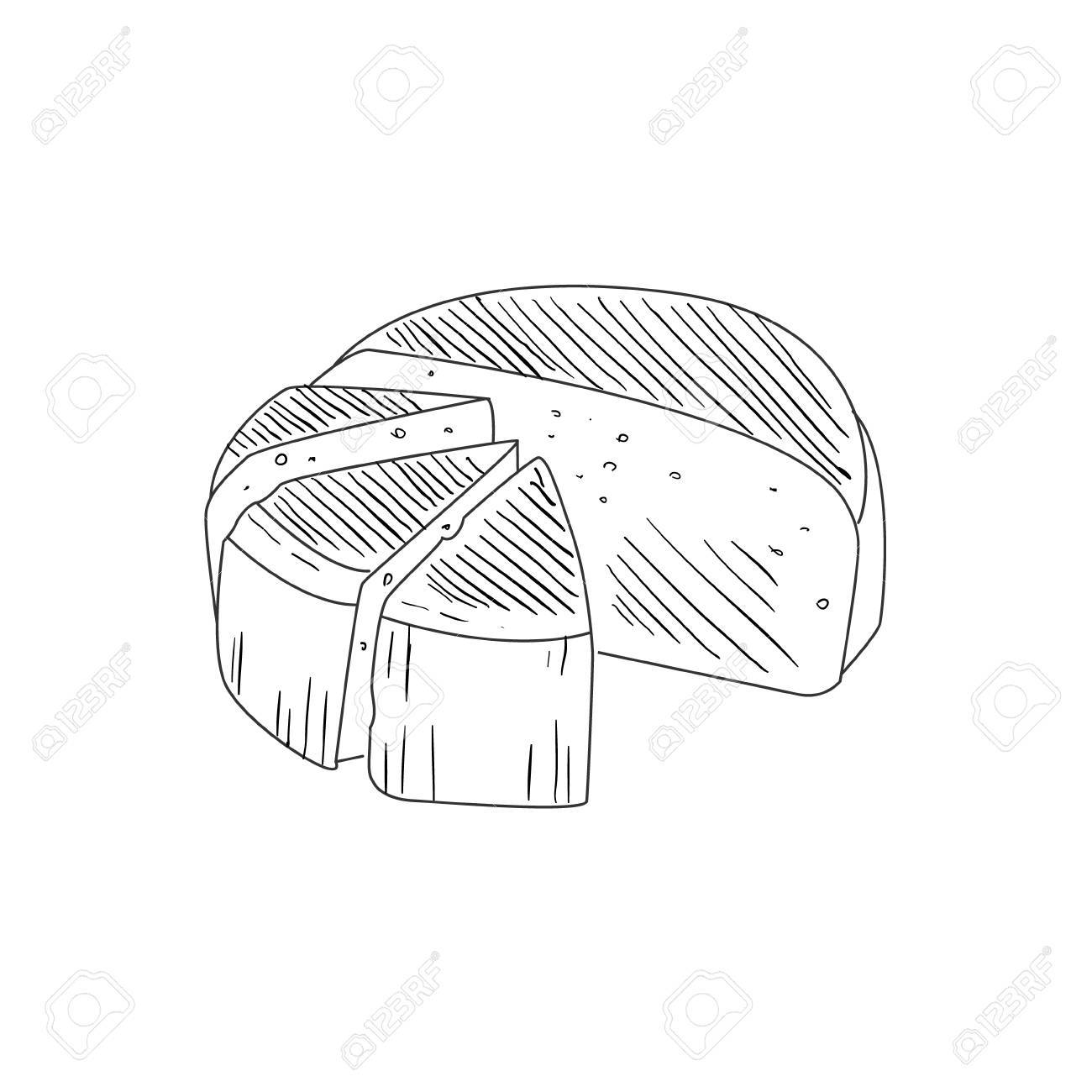 Round cheese cut in segments hand drawn realistic detailed sketch in classy simple pencil style on