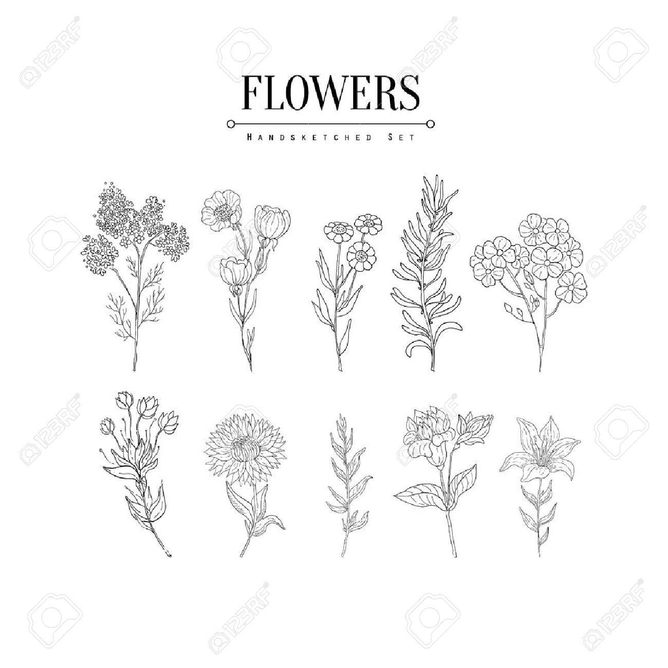 Flower Herbarium Hand Drawn Realistic Detailed Sketch In Classy Royalty Free Cliparts Vectors And Stock Illustration Image 60614138