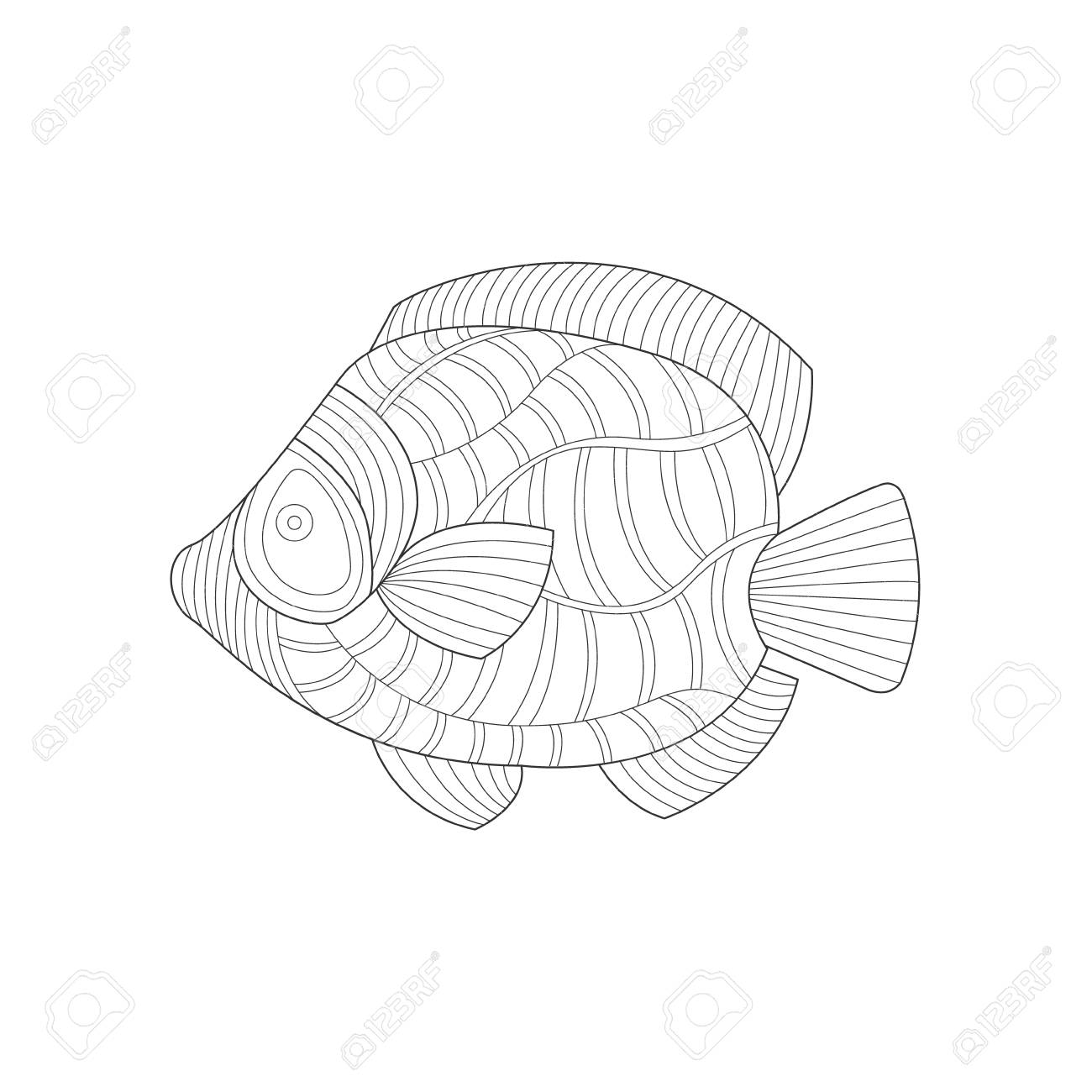 Angel Fish Sea Underwater Nature Adult Black And White Coloring Book Illustration Stock Vector