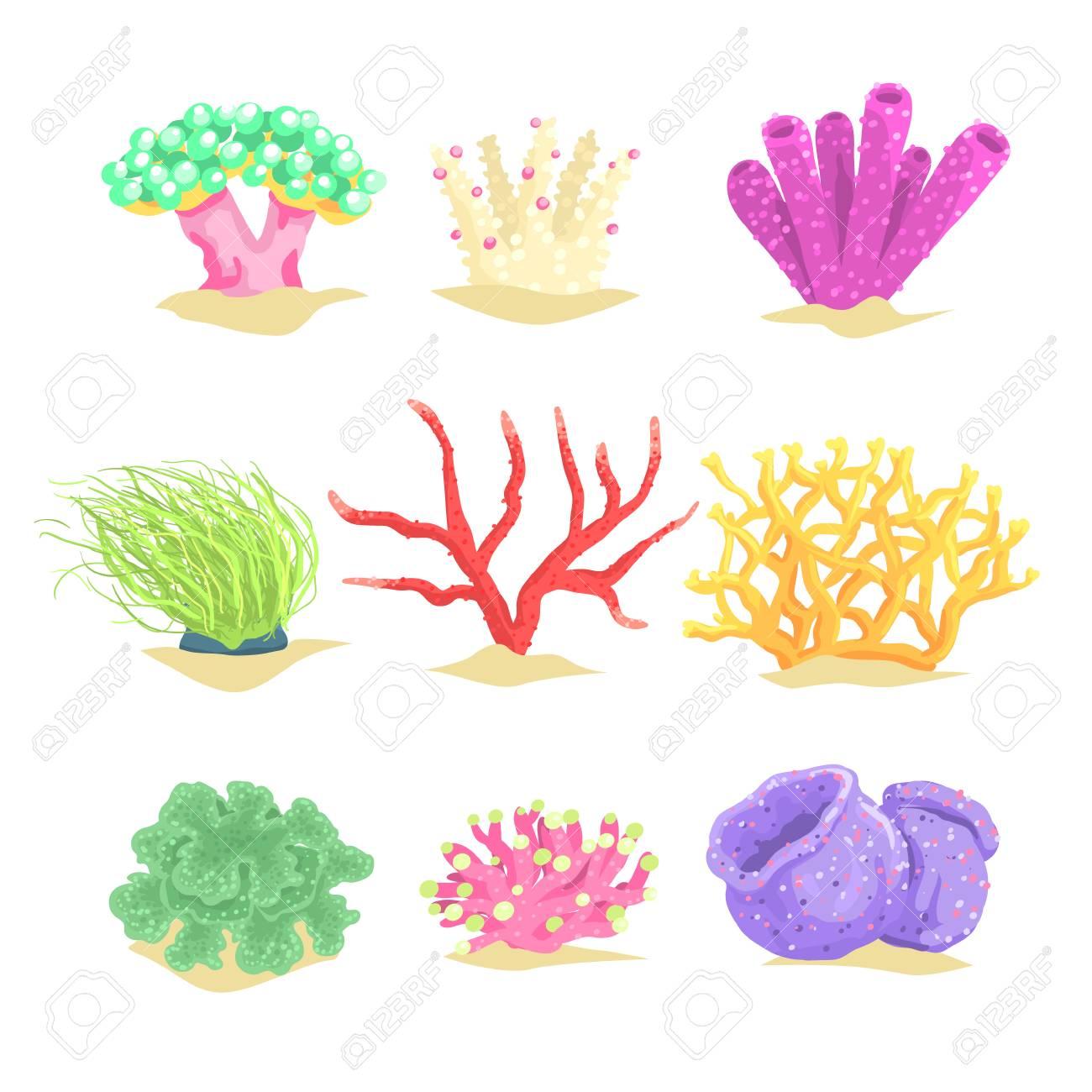 水中植物海藻や水生海藻ベクトル イラストのイラスト素材ベクタ