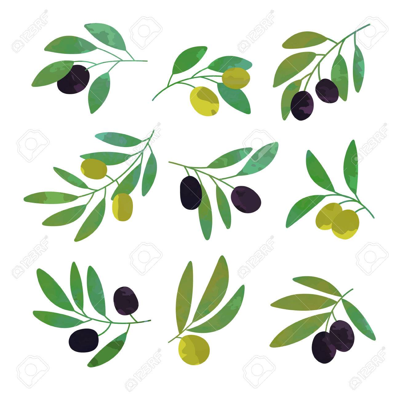 Olive Tree Branches Set Of Colorful Vector Illustrations Royalty