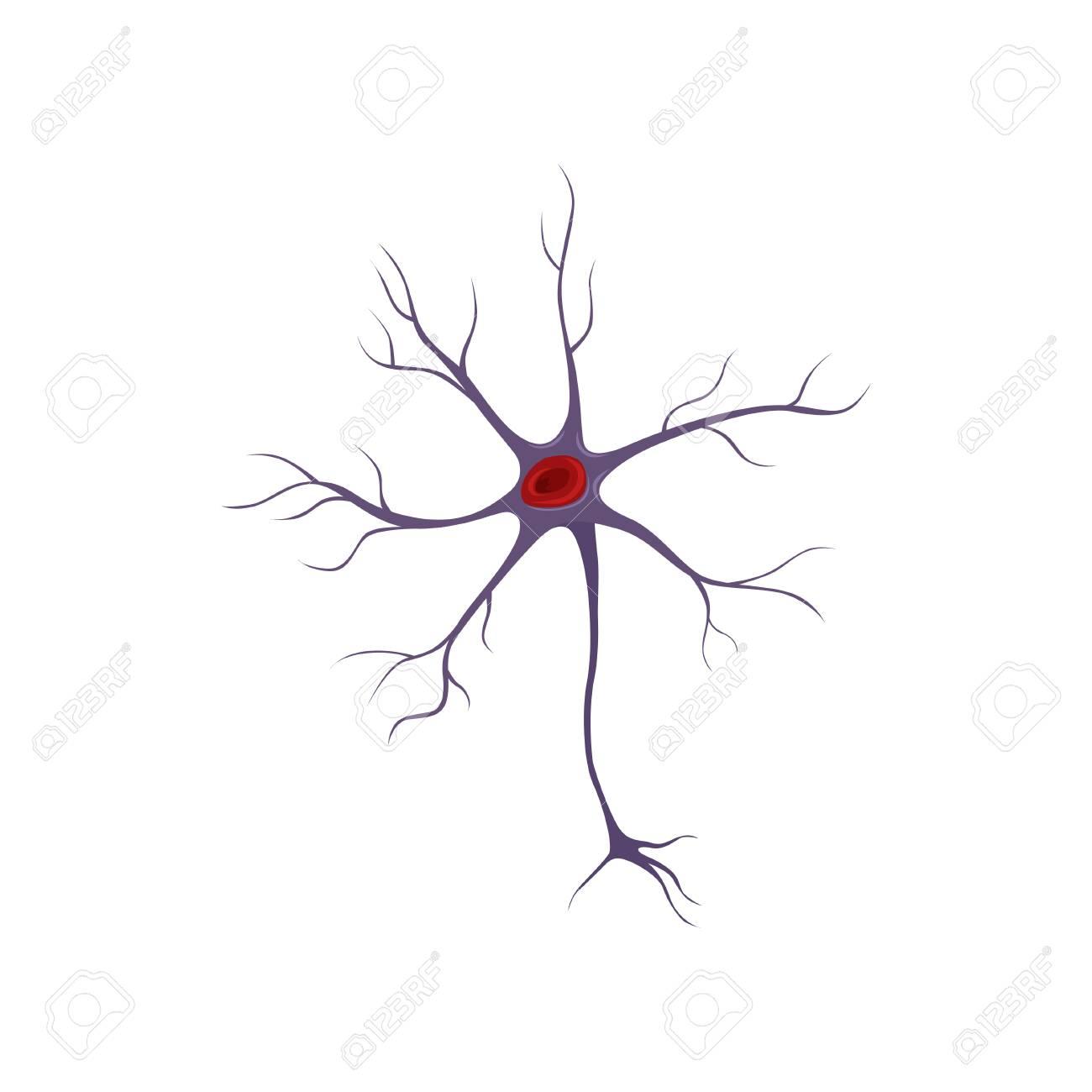 Estructura De La Neurona, Célula Nerviosa. Concepto De Anatomía Y ...