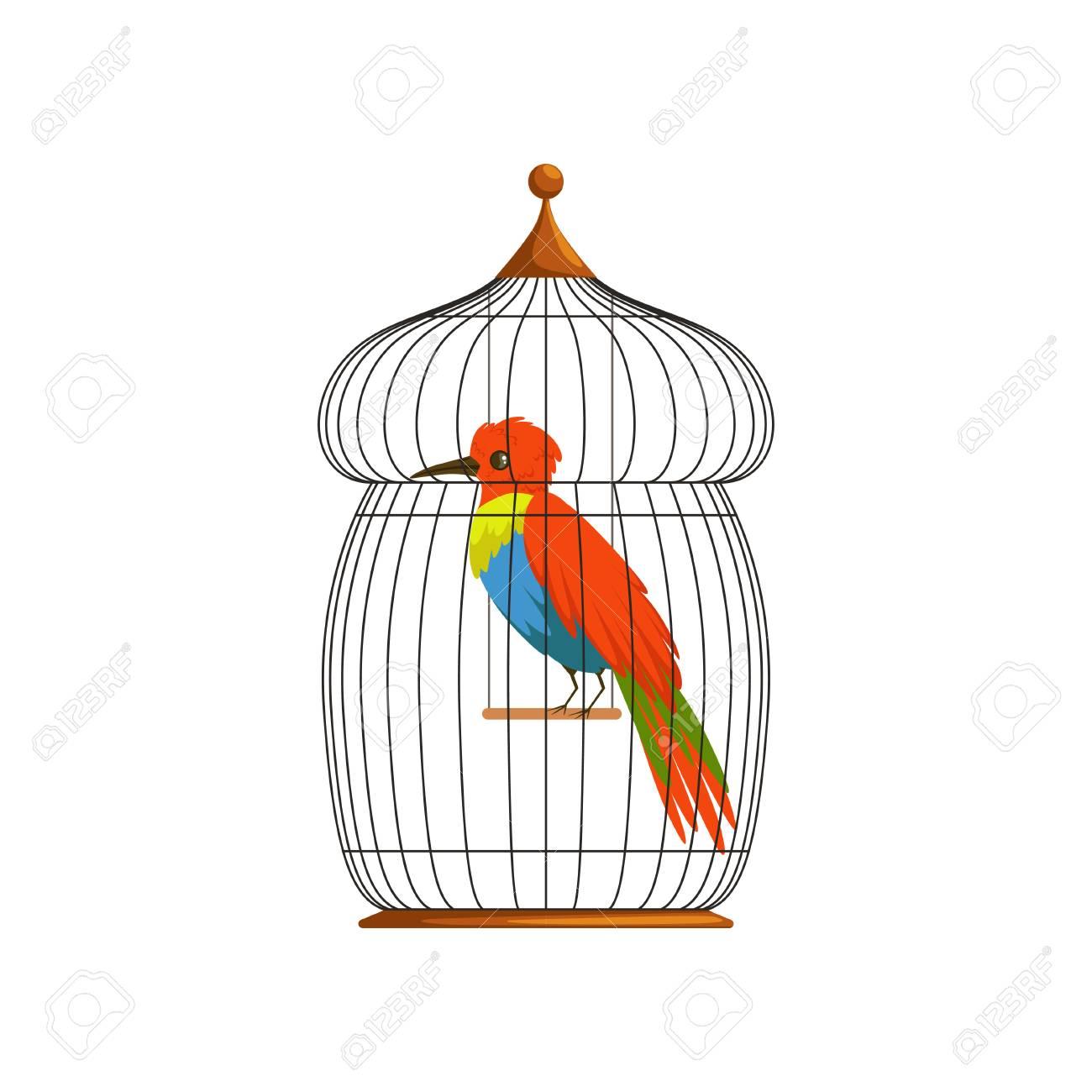 Dessin Oiseau En Cage grand oiseau avec de longues panaches brillants vert, bleu et rouge
