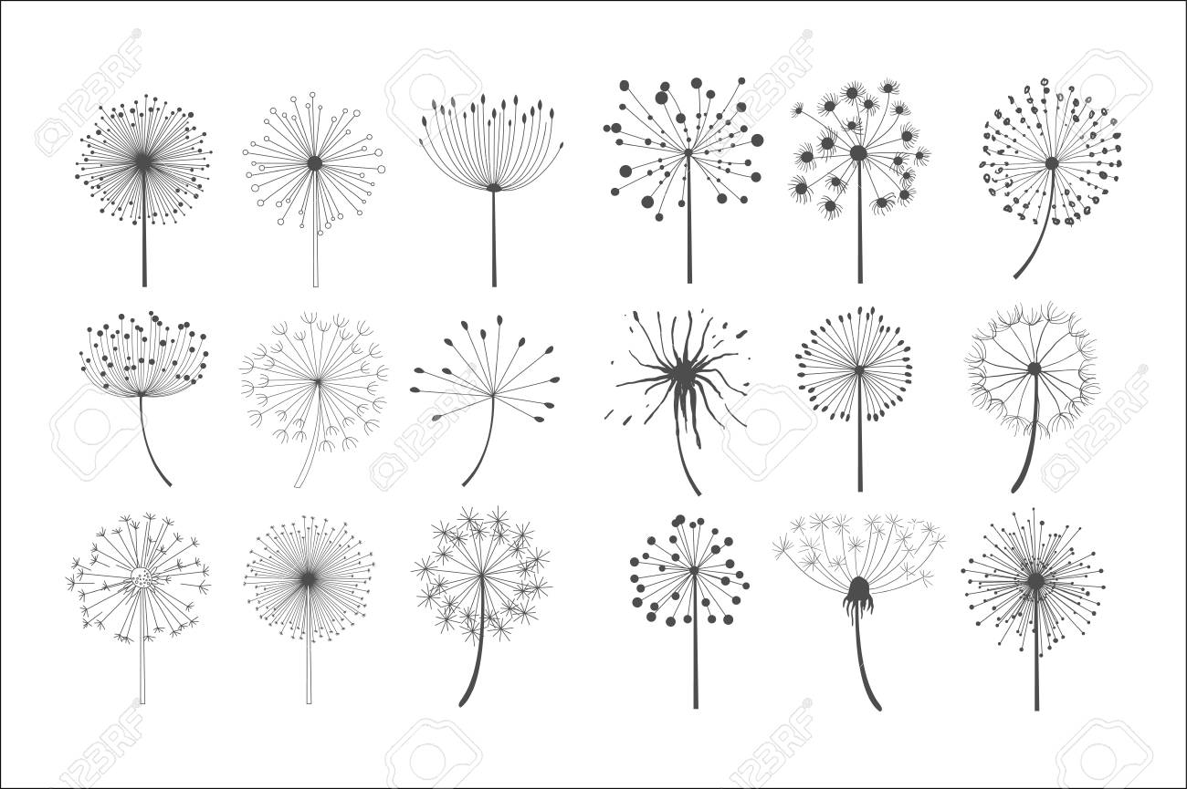 Dandelion flowers with fluffy seeds set, floral silhouettes design elements vector illustration on a white background. - 100135514