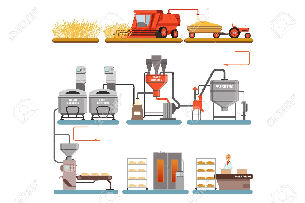 Bread production process stages from wheat harvest to freshly baked bread vector Illustrations isolated on a white background - 110273240