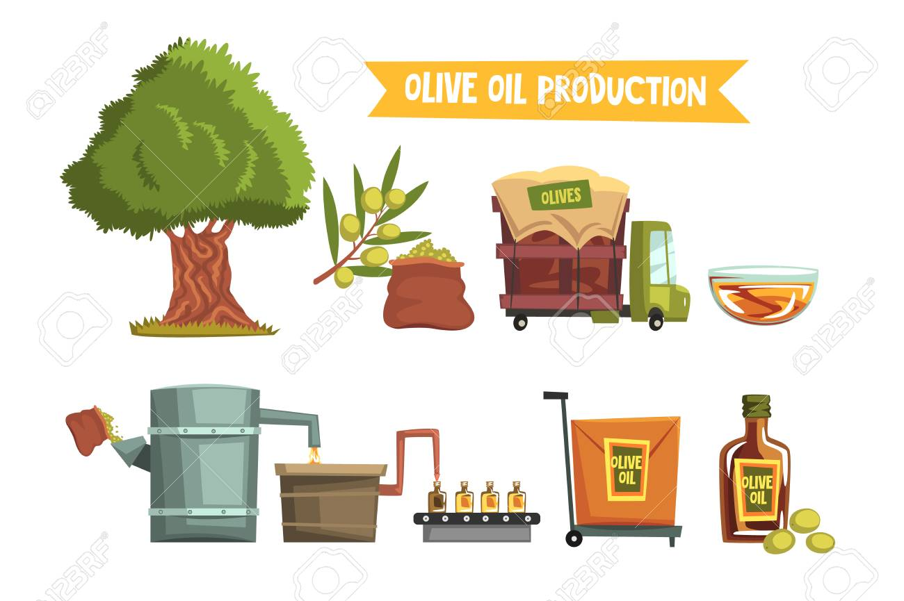 Process of olive oil production by steps from cultivation to