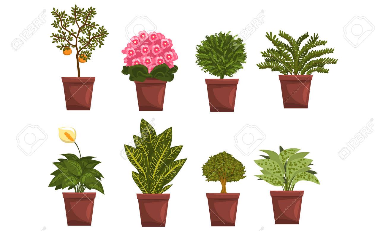Indoor House Plants in Brown Pots Set, Home Interior Decoration Design Vector Illustration on White Background. - 152230251
