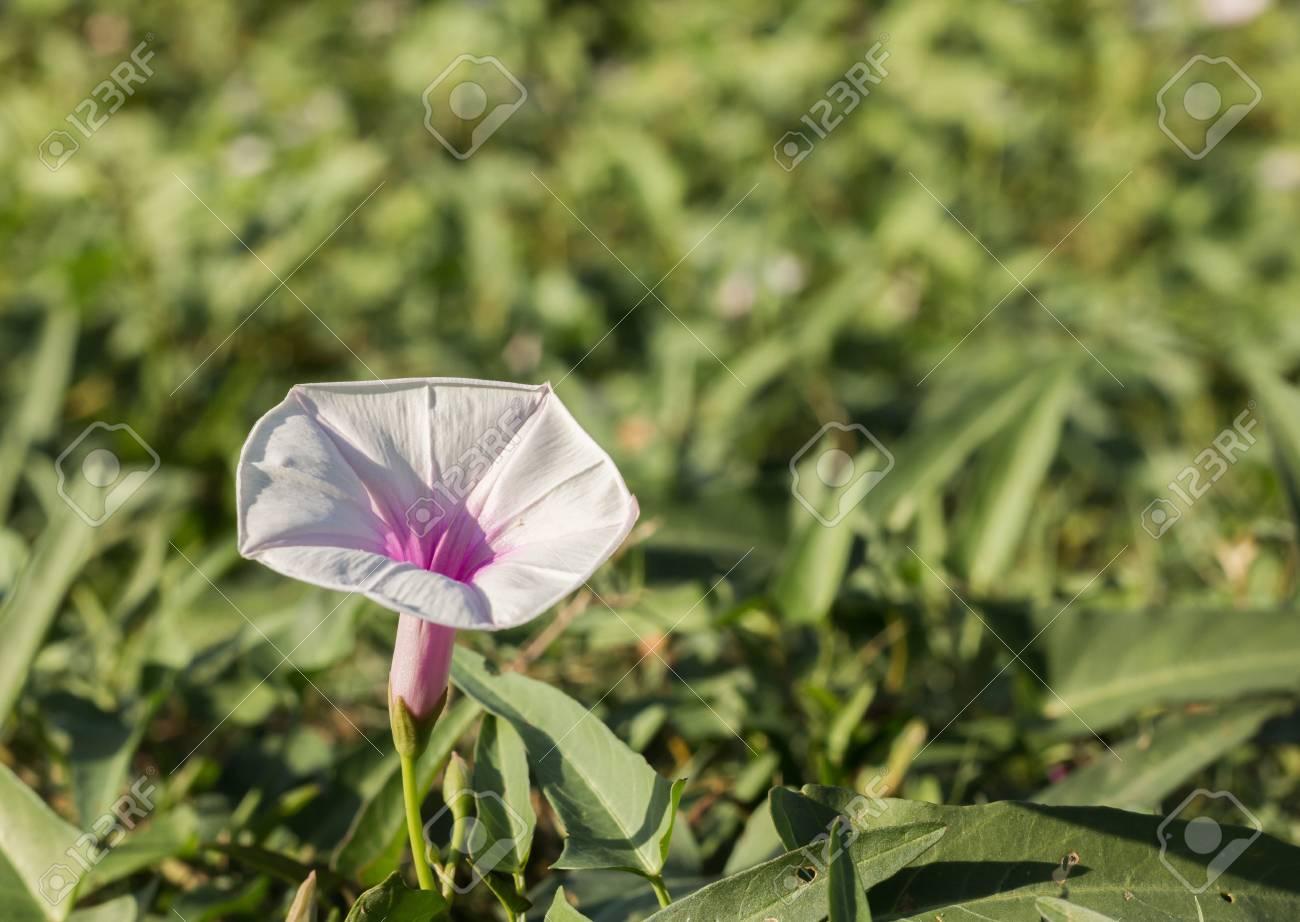 flowers Stock Photo - 17144066
