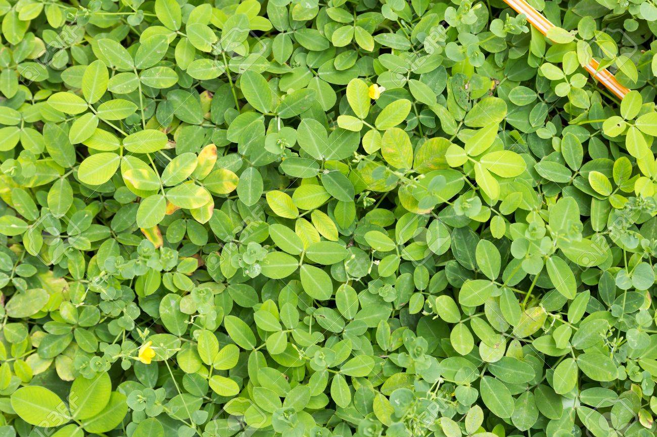 Green Bush Bright In The Garden Stock Photo Picture And Royalty