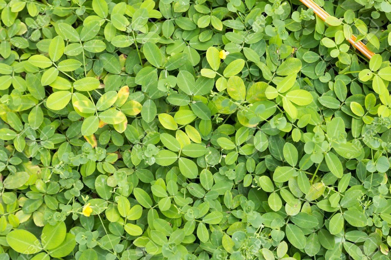 Green Bush Bright In The Garden Stock Photo   18964342