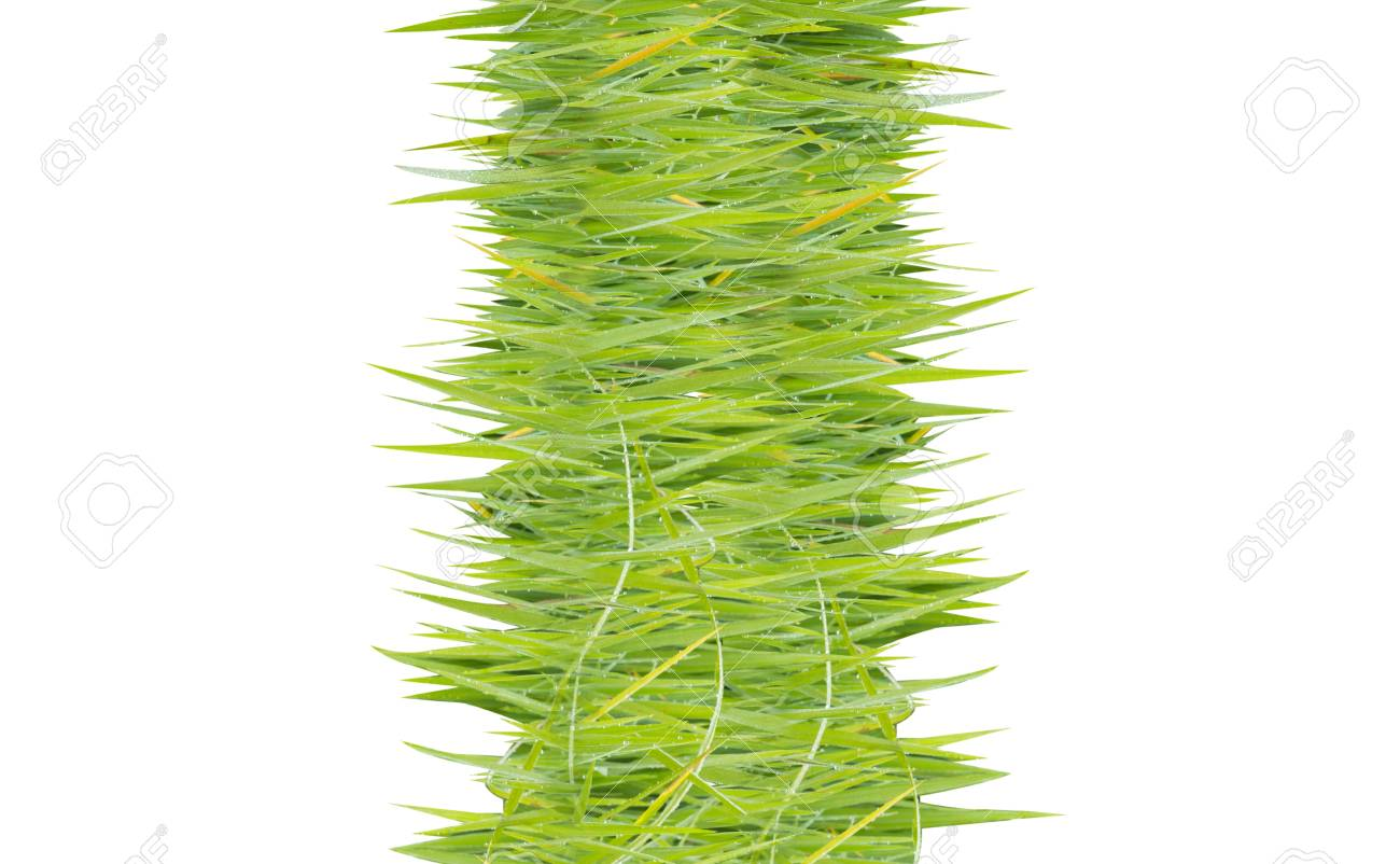 texture image is grass green color Stock Photo - 20282876