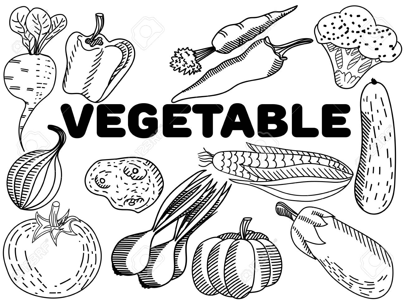Vegetable Coloring Book For Adults Vector Illustration. Anti-stress ...