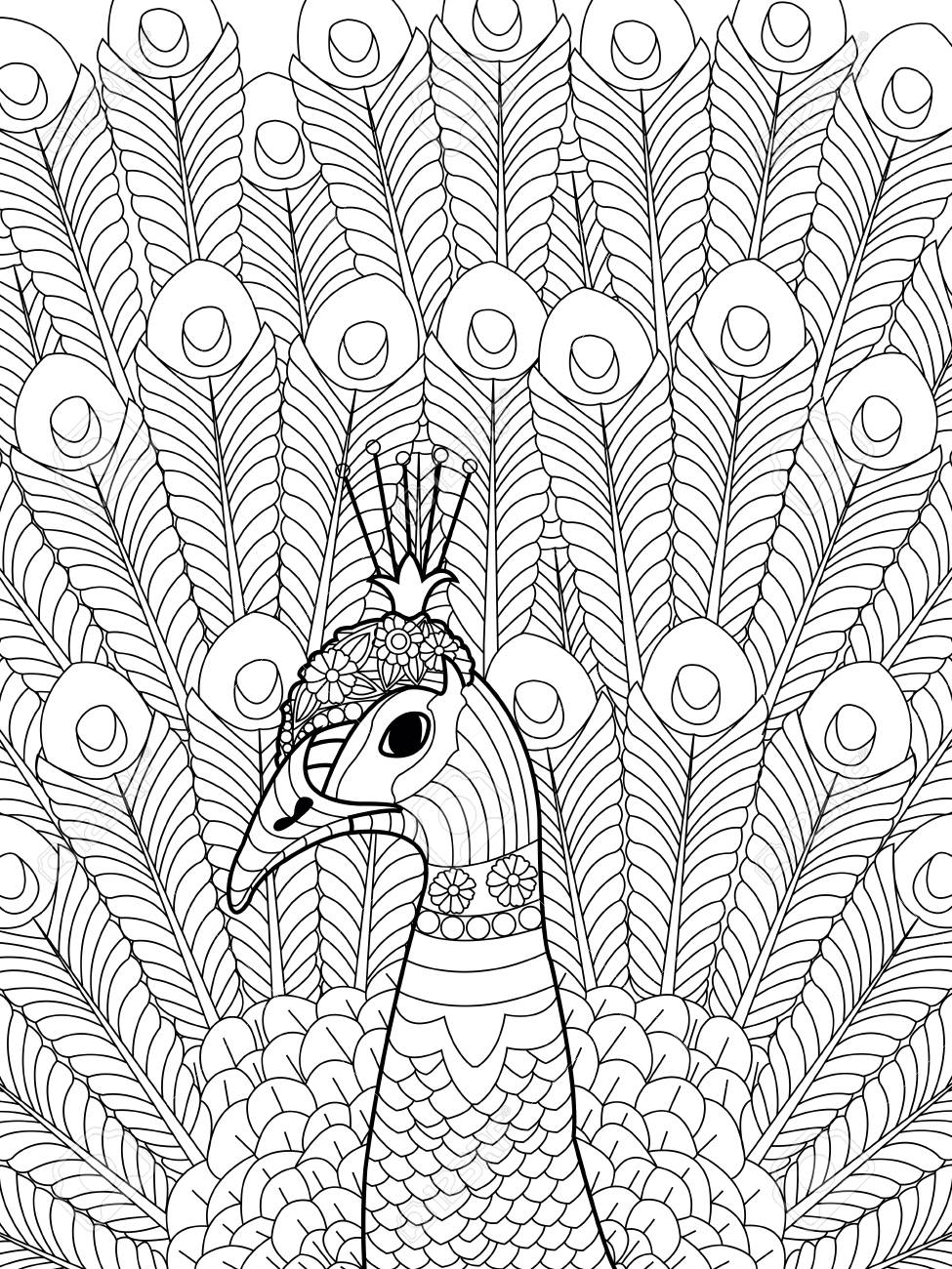 - Peacock Coloring Book For Adults Vector Illustration. Anti-stress