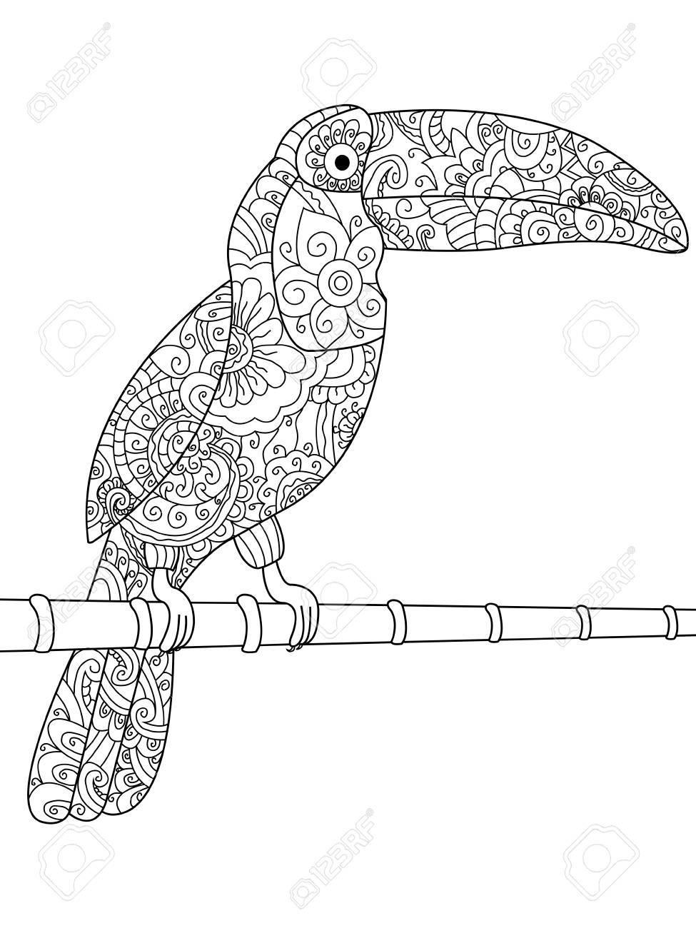 オオハシ大人図の動物の塗り絵大人のための着色抗ストレススタイル