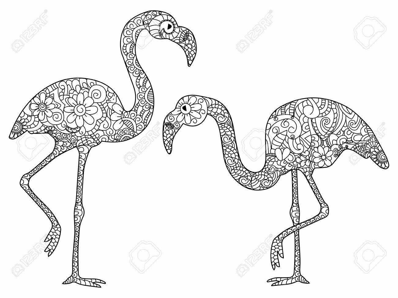 Dos Flamencos Libro Para Adultos Ilustración. Antiestrés Para ...