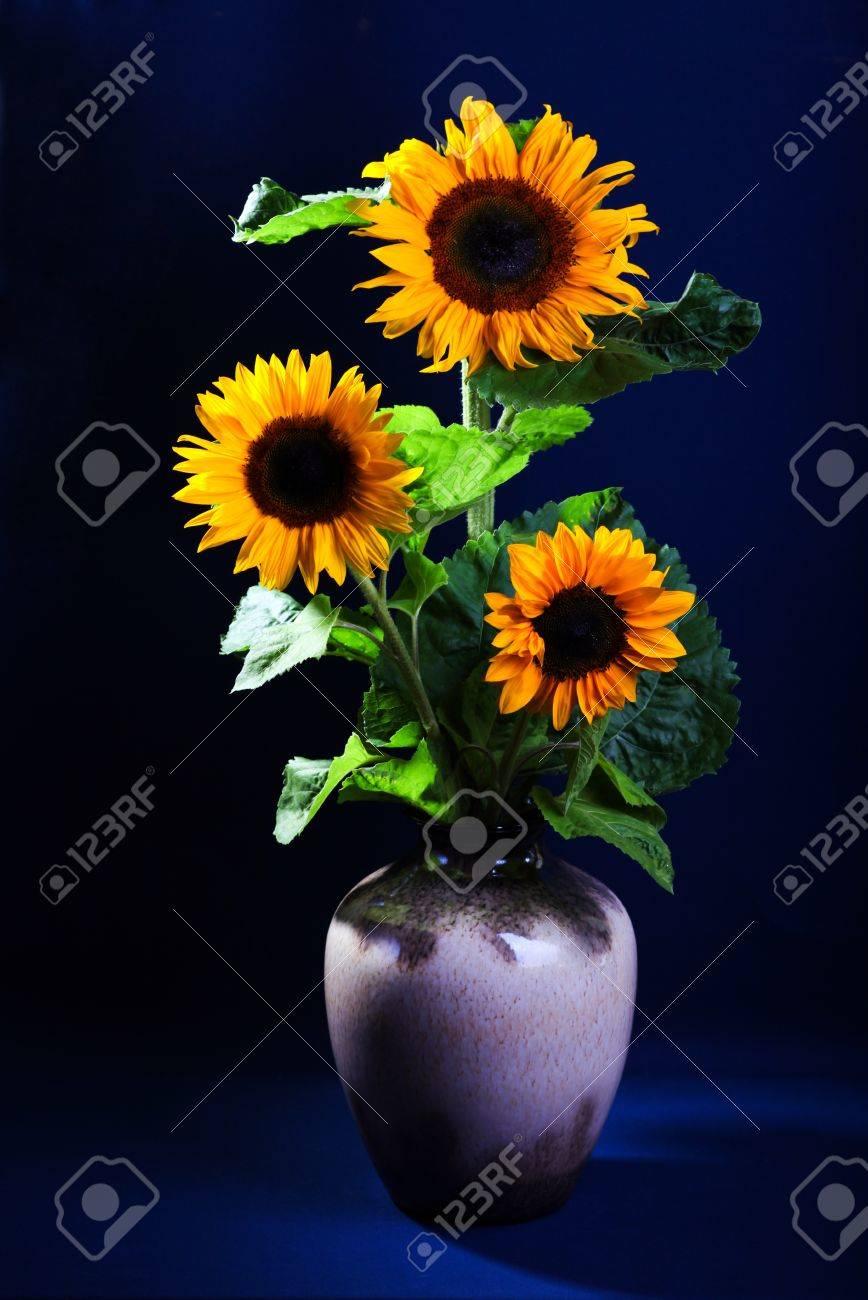 Still life with sunflowers on dark blue background Stock Photo - 14386279