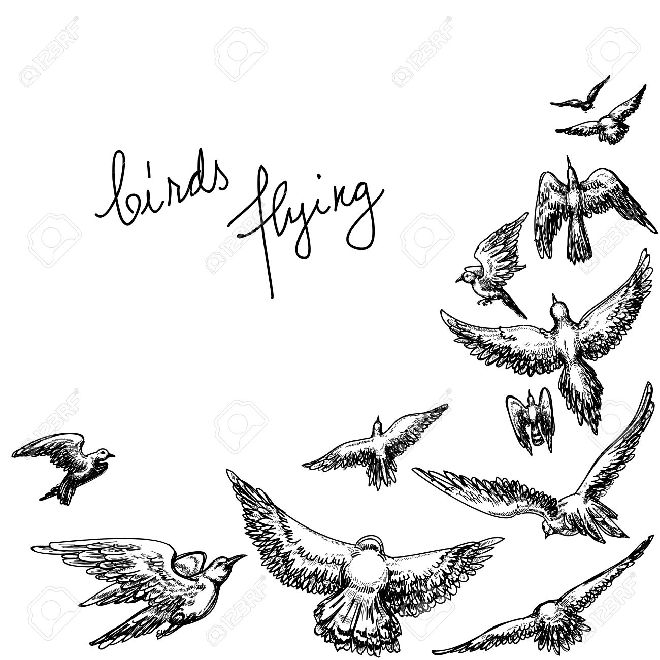 Set of sketches of flying swallows stock vector illustration - Hand Drawn Animals Flying Birds Background Pencil Drawing Vector Illustration