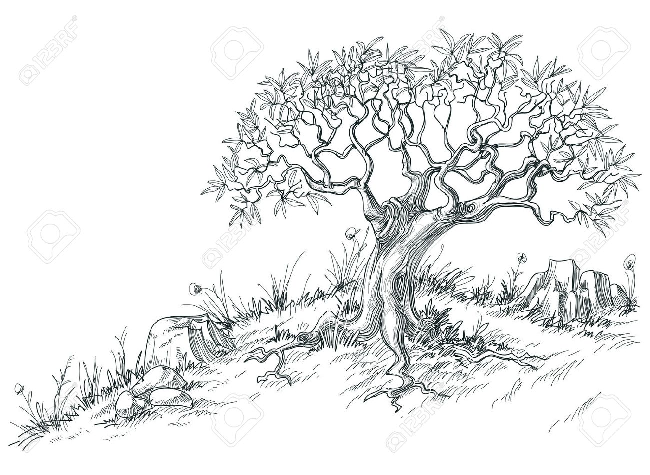 Graphic Drawings Olive Tree Graphic Drawing