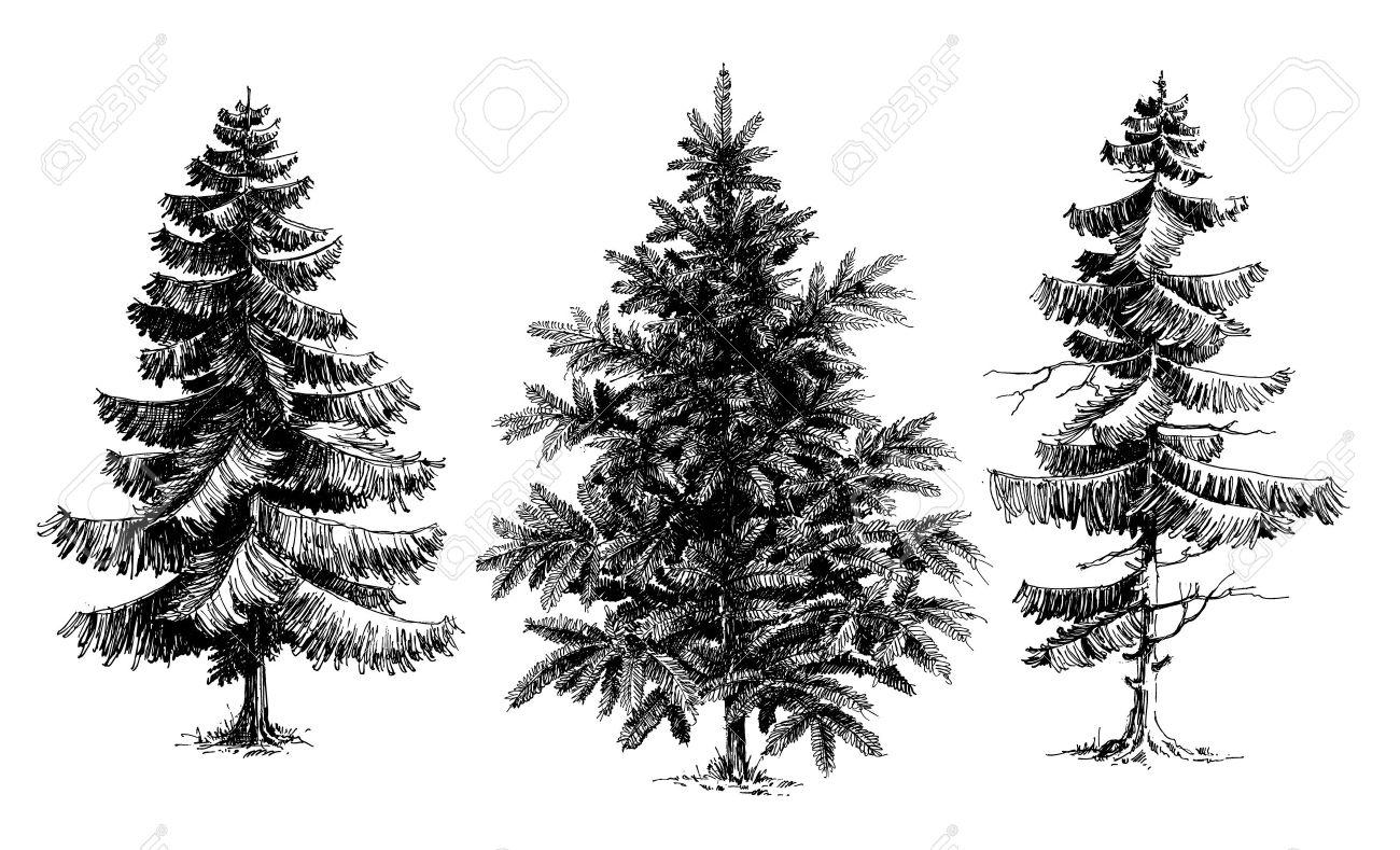 perfect foto de archivo los rboles de pino rbol de navidad dibujado a mano vector conjunto realista aislado ms de blanco