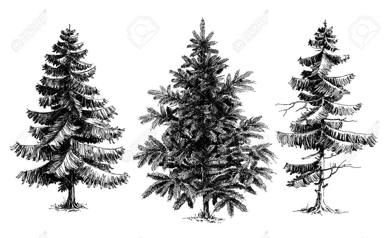 Pine Trees / Christmas Trees Realistic Hand Drawn Vector Set ...