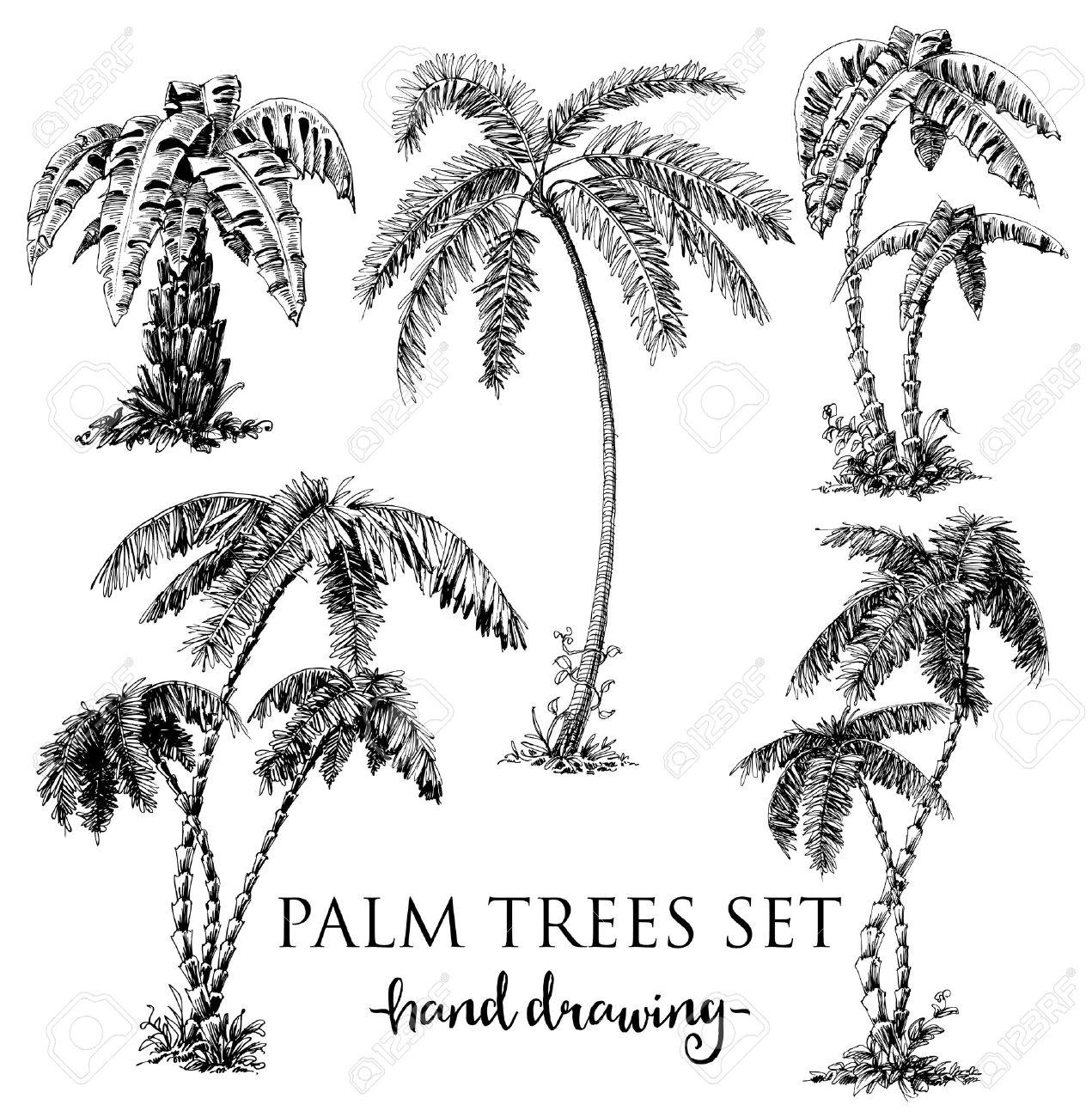 Detailed palm trees set - 43124915