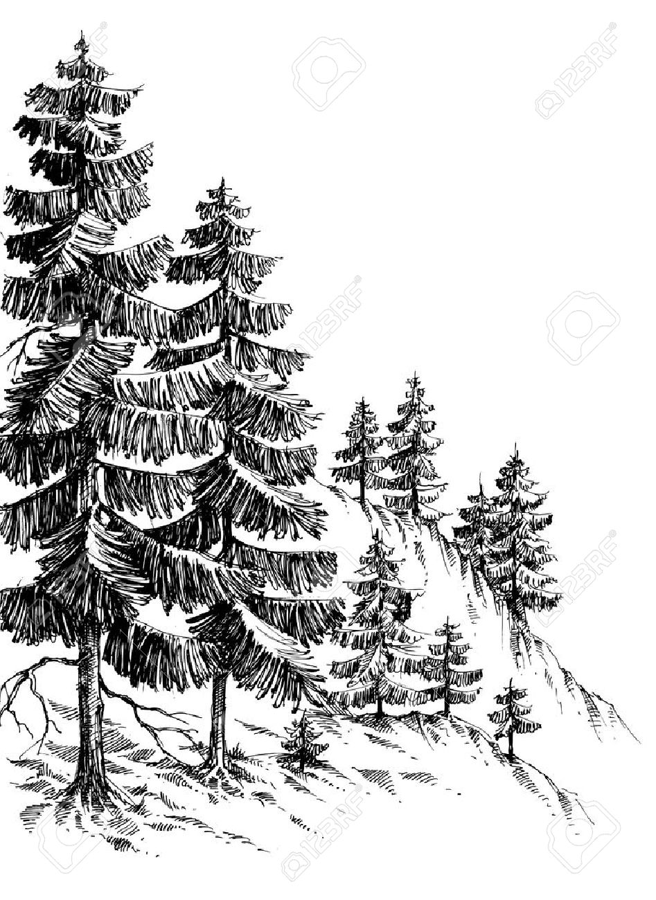 Pine forest, winter mountain landscape drawing - 46666935