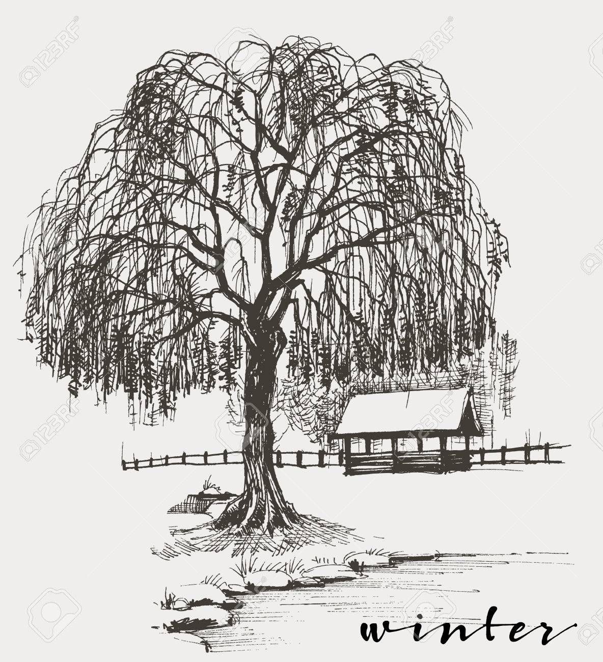 Winter sketch, willow tree - 51327202