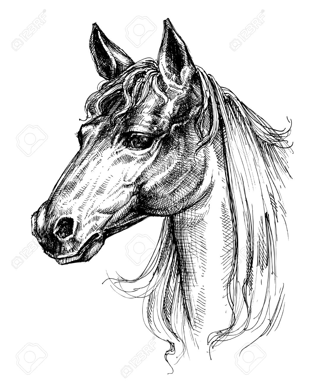 Horse Head Drawing Royalty Free Cliparts Vectors And Stock Illustration Image 51327300