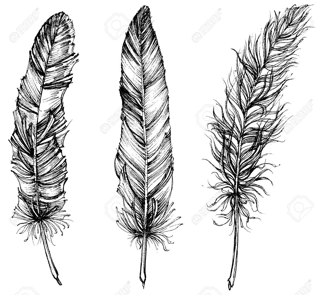 Detailed feathers isolated - 53512904