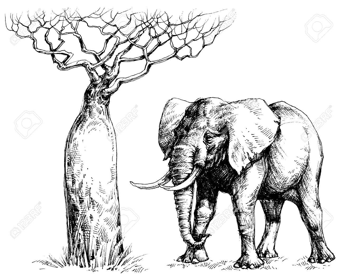 African Elephant And Baobab Royalty Free Cliparts, Vectors, And ...