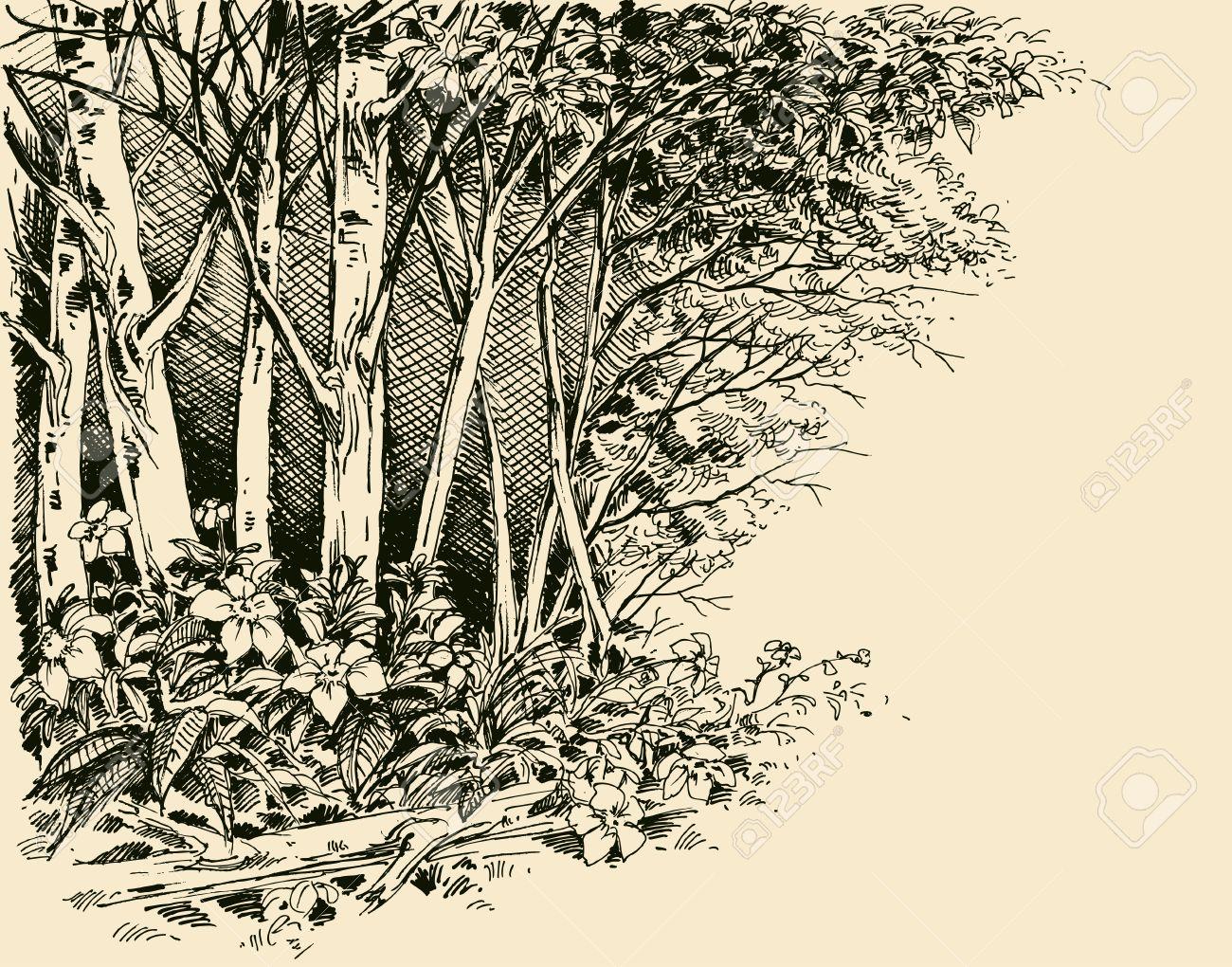 Forest edge drawing, generic vegetation sketch - 58650020