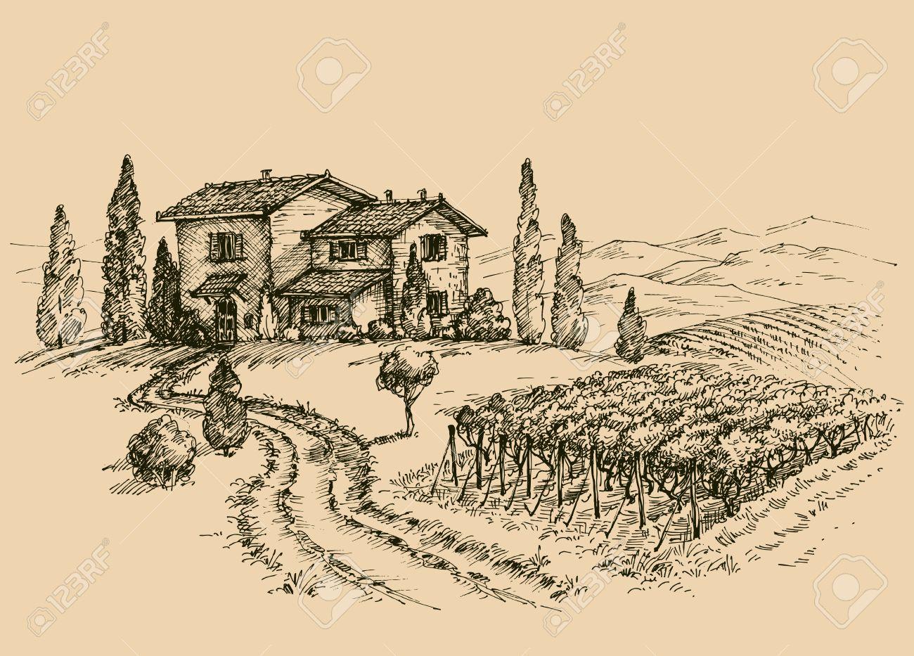 Vineyard drawing. Traditional farm sketch - 61110371