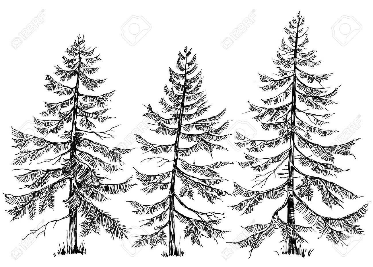 Pine trees collection. Hand drawn Christmas trees - 65005051