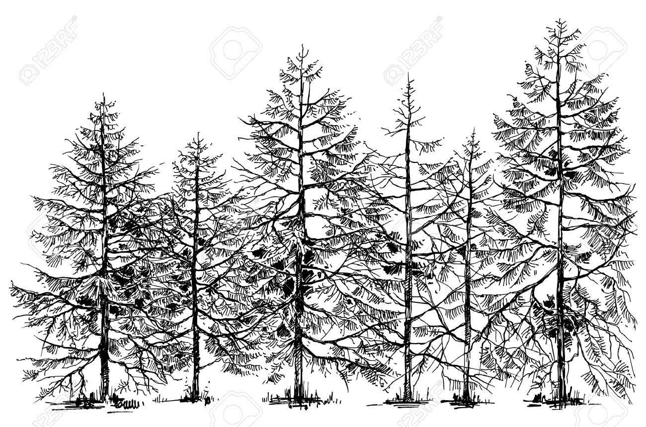 Pine forest hand drawn border - 65005087