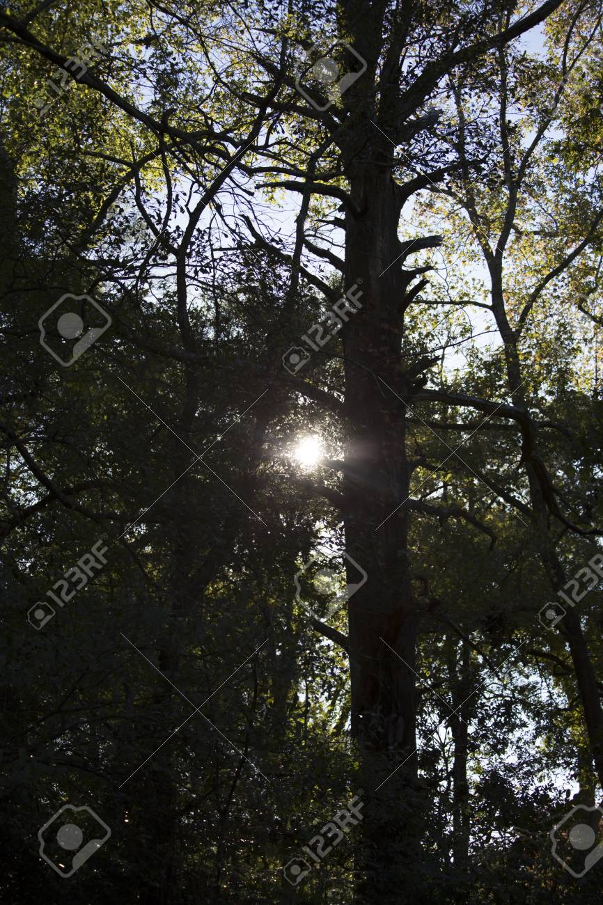 Sun shining lightly through a dark, creepy forest