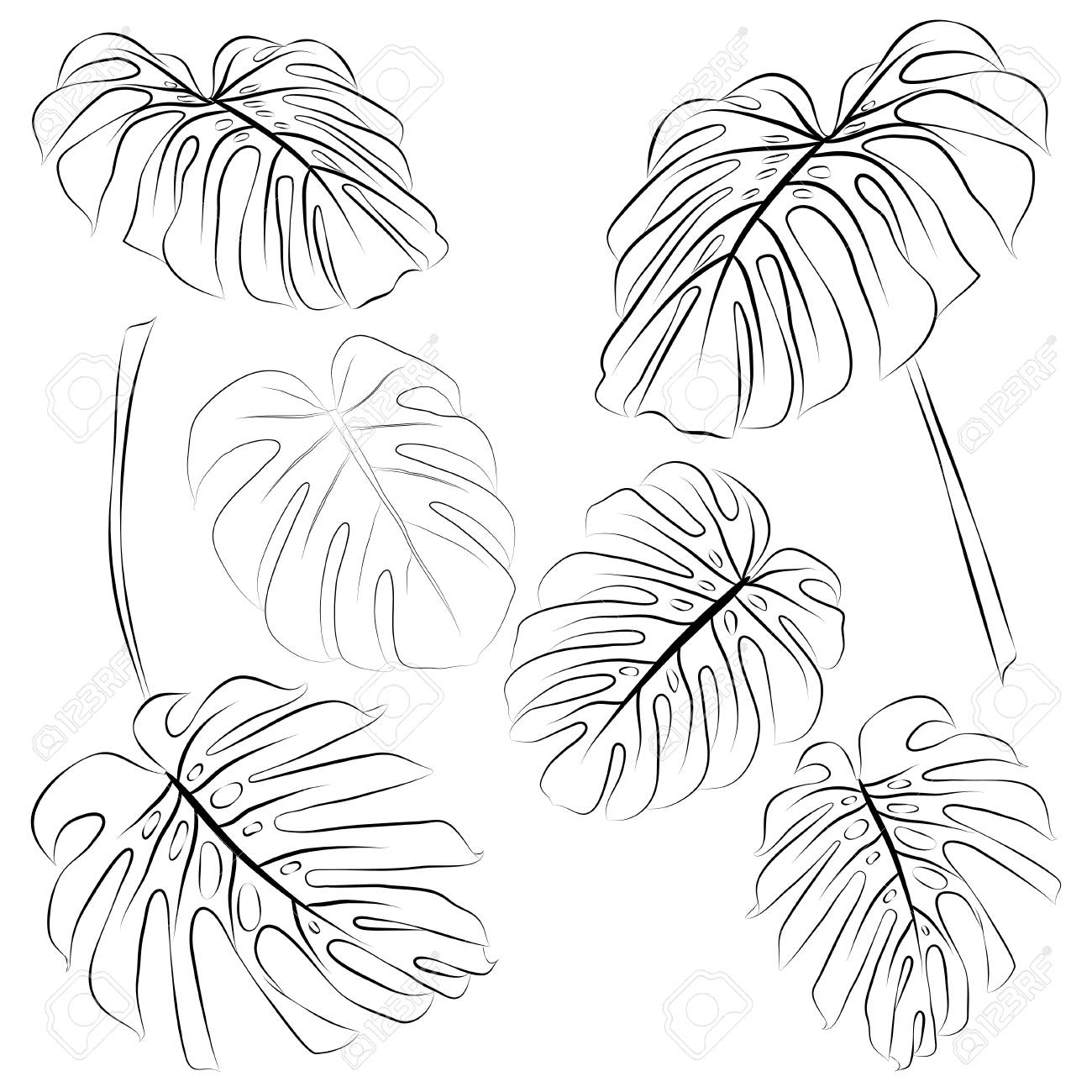 Set Of Tropical Monstera Leaves Outline Vector Illustration Royalty Free Cliparts Vectors And Stock Illustration Image 88966509 Alibaba.com offers 1,329 artificial tropical leaves products. set of tropical monstera leaves outline vector illustration royalty free cliparts vectors and stock illustration image 88966509