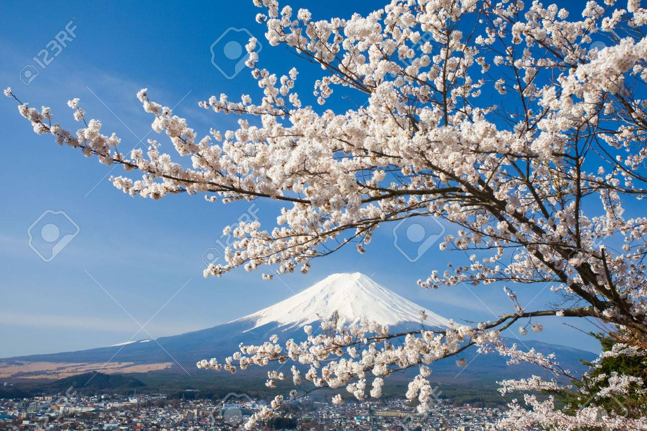 mountain fuji and cherry blossom sakura in spring season stock