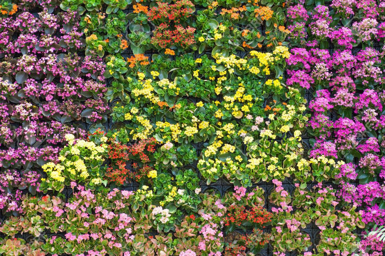Flower Wall Wall Flower Stock Photos Pictures Royalty Free Wall Flower