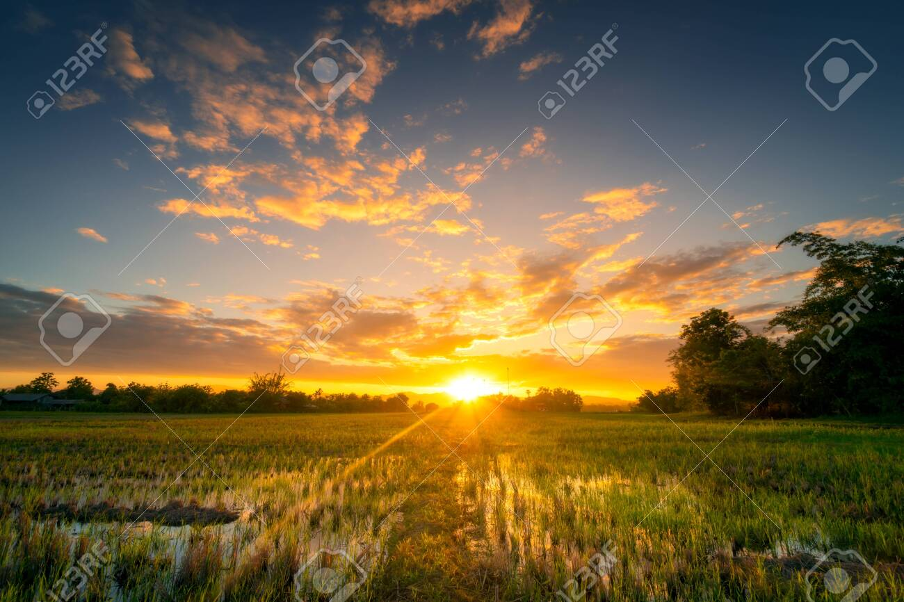 Natural scenic Beautiful rice field and sunset at Thailand. - 125973349