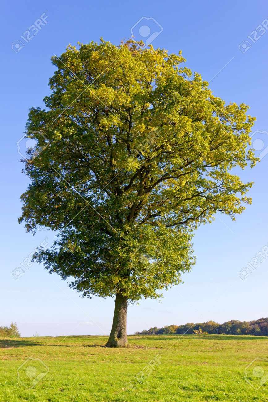 Big beautiful tree - 143285047